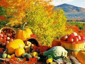 Сезонные работы осенью