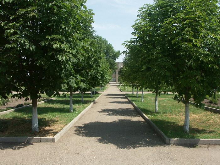 Новая аллея в Лагерном саду Томска