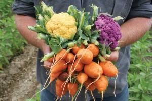 Программа поддержки огородничества и садоводства организована в Рязани