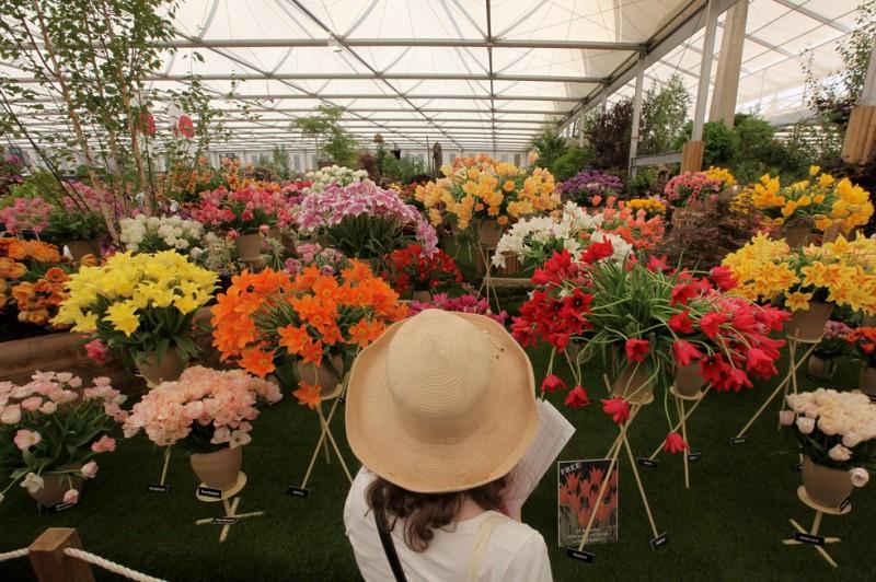 Британские рекорды на «Шоу садоводства 2010»