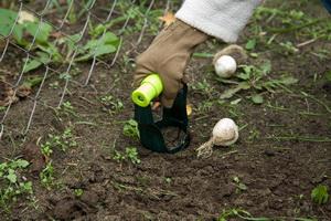 Посадка луковичных растений весной