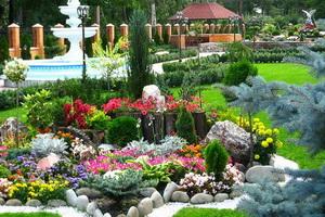 Лиственные вечнозеленые кустарники для сада с фото и названиями