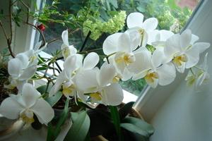 Какие комнатные цветы держать в квартире