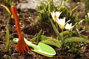 Календарь садовода-огородника на февраль: работы на участке