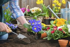 Март в саду и на огороде: работы садовода-огородника на участке