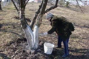 Уход за садом в ноябре: работы на дачном участке