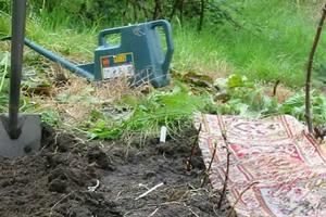 Работа в саду и на огороде в августе: что делать на даче