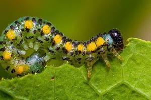 Вредители растений: фото, описание и меры борьбы с ними